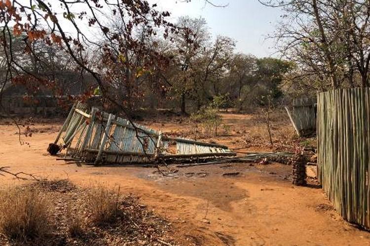 Elephants in Camp - October Update